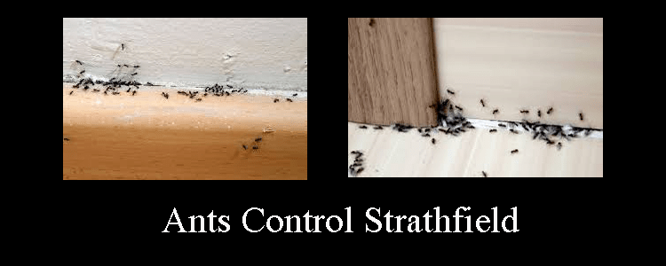 Ants Control Strathfield